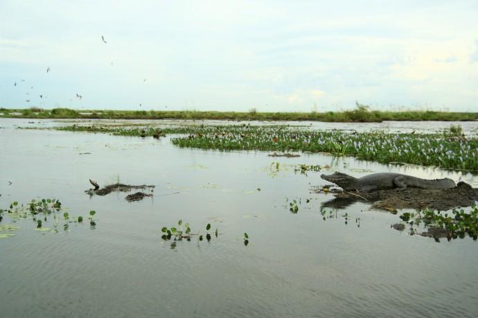 Hai Departe Argentina Esteros del Ibera (14)