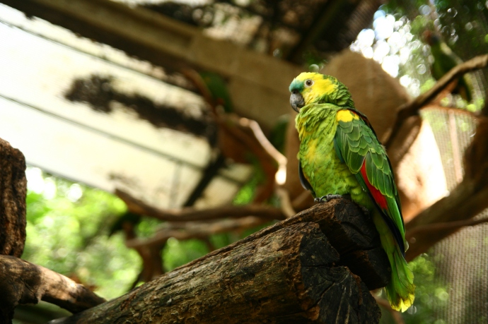 Hai Departe Brazilia Iguazu (2)