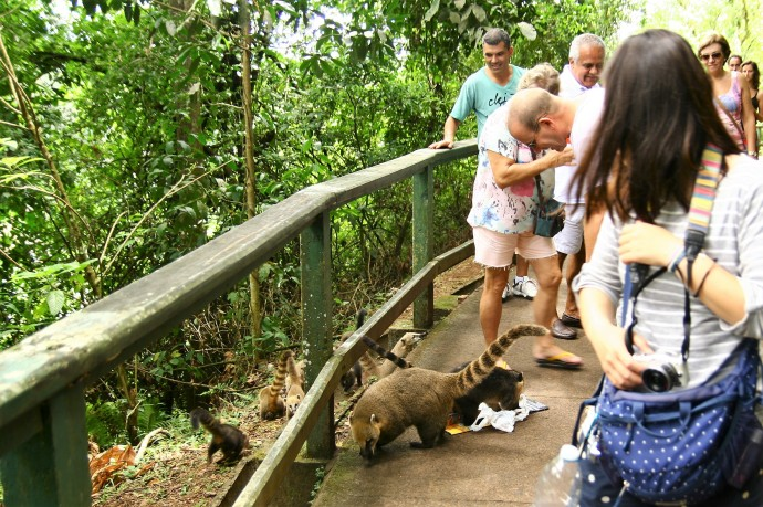 Hai Departe Brazilia Iguazu (9)