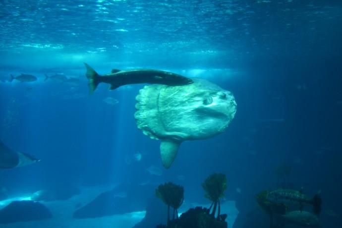 Hai Departe Lisabona Oceanarium (1)