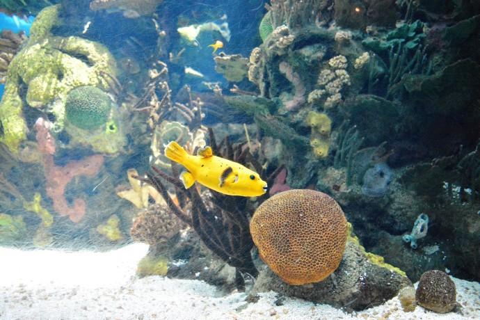 Hai Departe Lisabona Oceanarium (10)