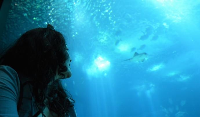 Hai Departe Lisabona Oceanarium (11)