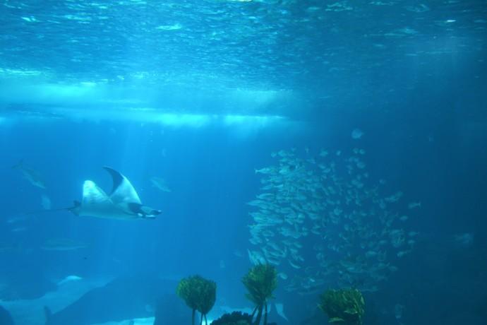 Hai Departe Lisabona Oceanarium (14)