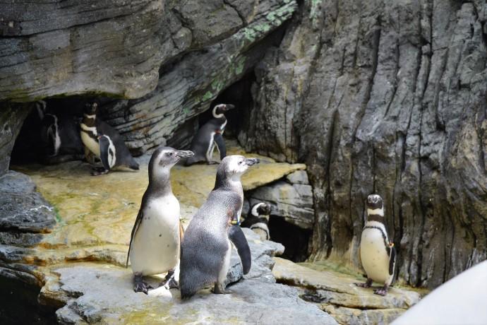Hai Departe Lisabona Oceanarium (2)