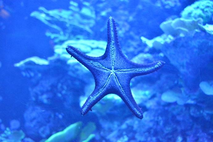 Hai Departe Lisabona Oceanarium (9)