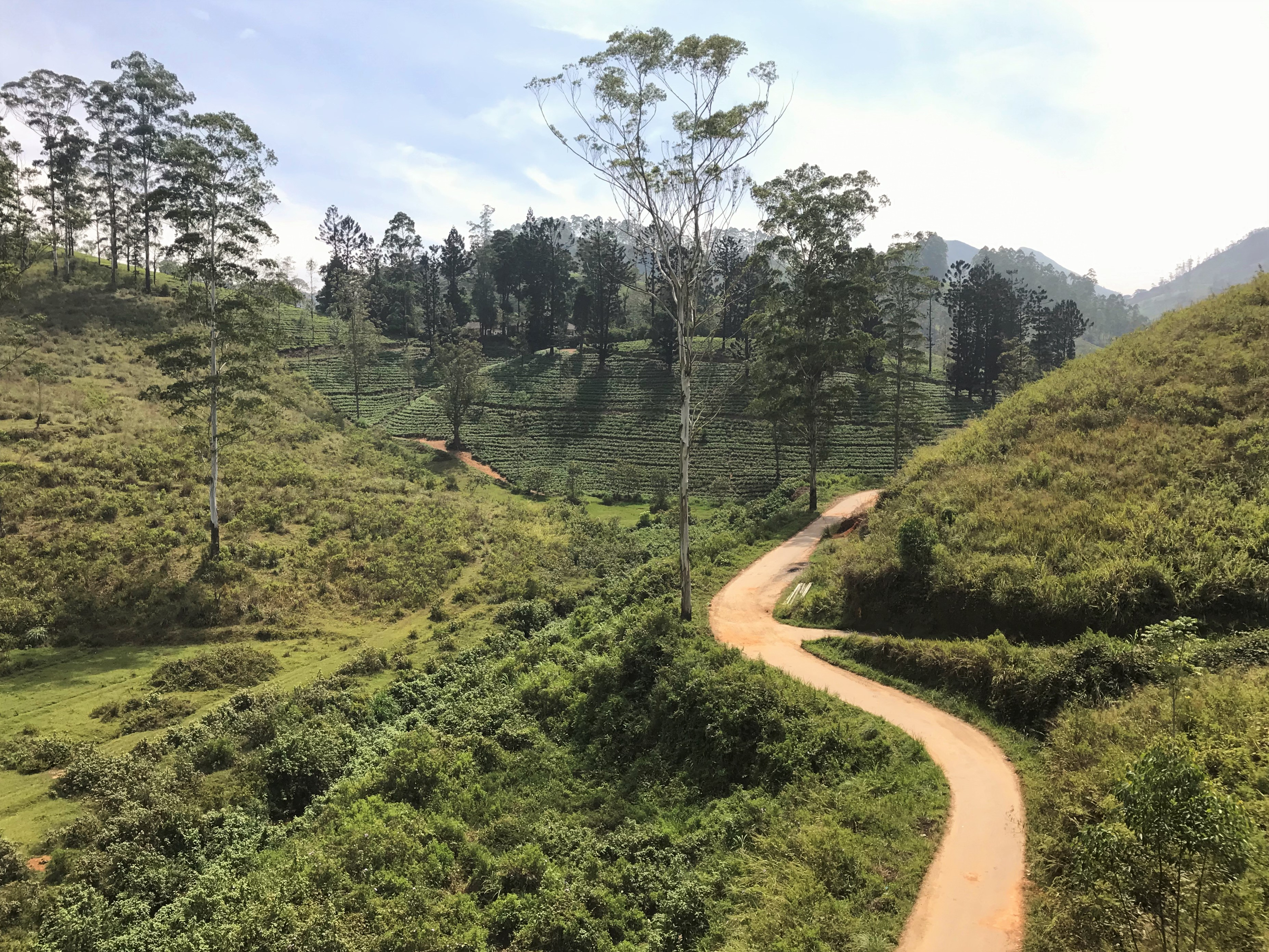 Hai Departe Sri Lanka (5)