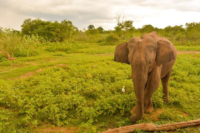 Hai Departe Sri Lanka Udawalawe (1)