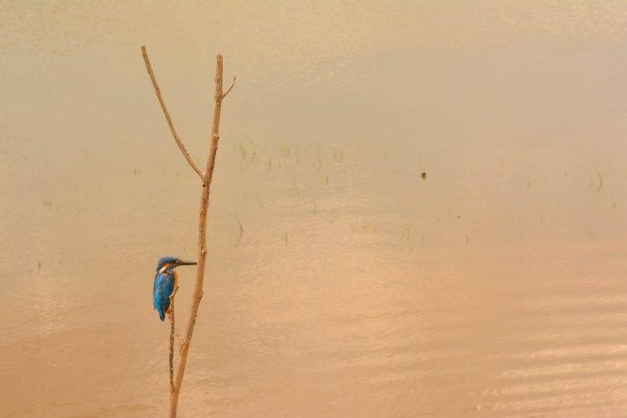 Hai Departe Sri Lanka Udawalawe (14)