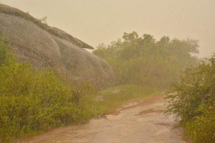 Hai Departe Sri Lanka Udawalawe (5)
