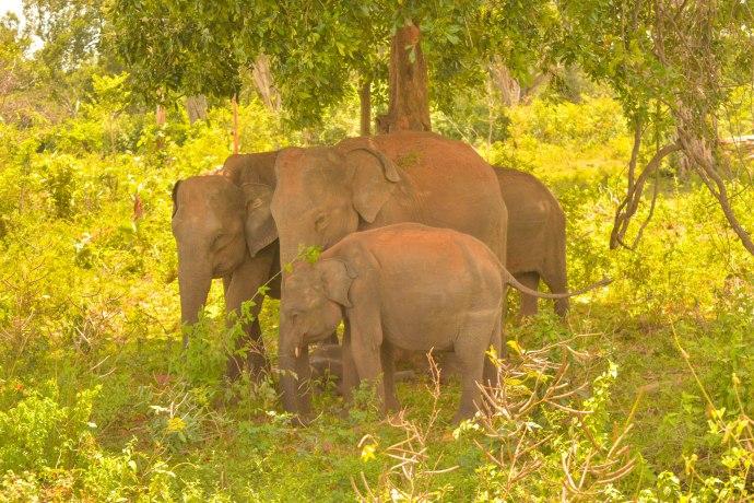 Hai Departe Sri Lanka Udawalawe (7)
