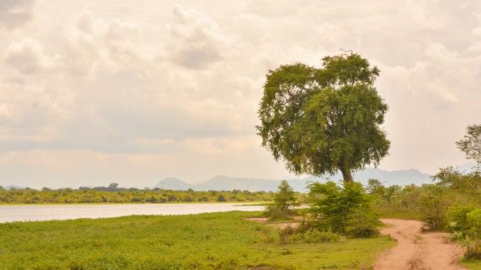 Hai Departe Sri Lanka Udawalawe (9)